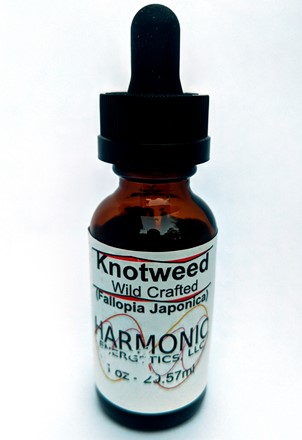 Knotweed (W) T-1